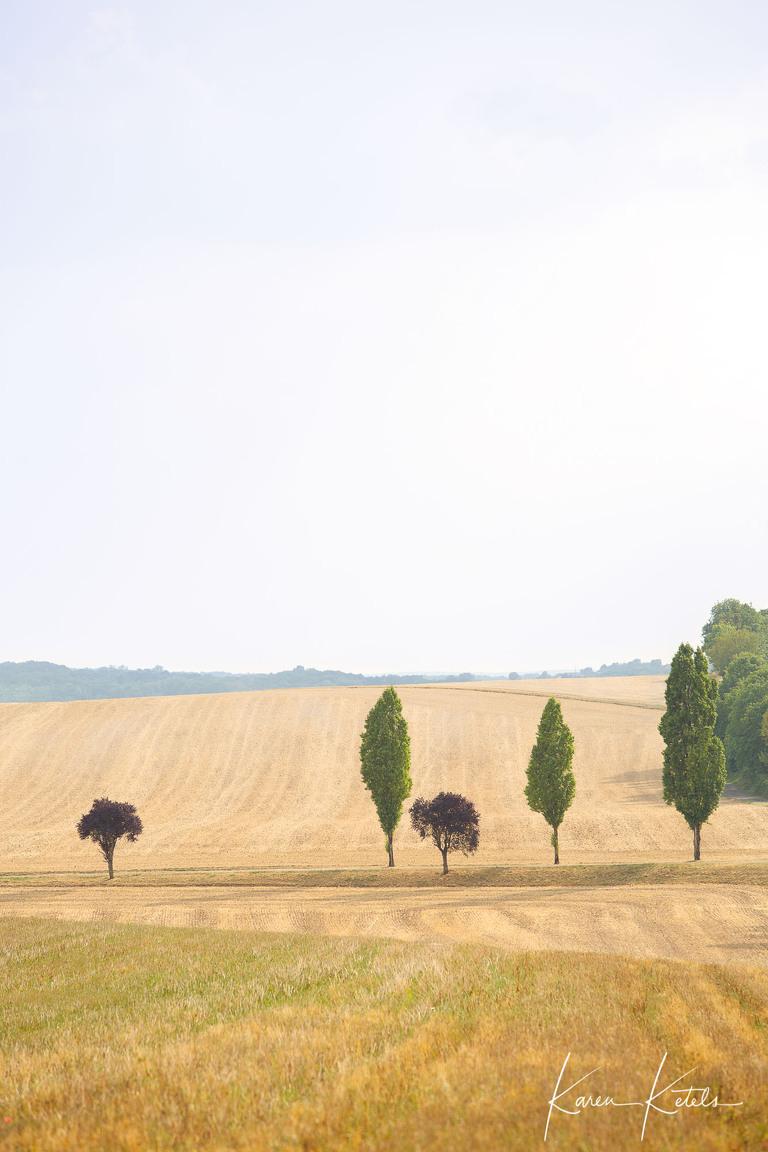 Minimalistisch beeld van een rij boompjes, afwisselend klein en rond en hoog en lang, in de Franse Bourgogne. Landschapsfotograaf Karen Ketels