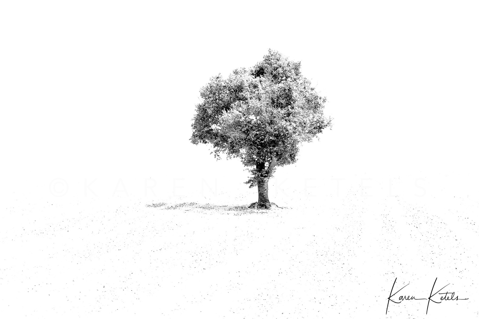 Black- and white image of a tree, standing totally alone in the field. Minimalistic image by Karen Ketels