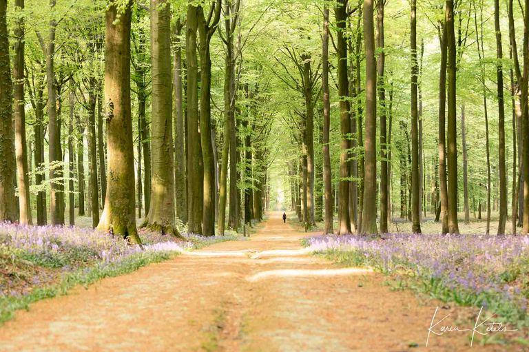 Walking in the woods by Karen Ketels