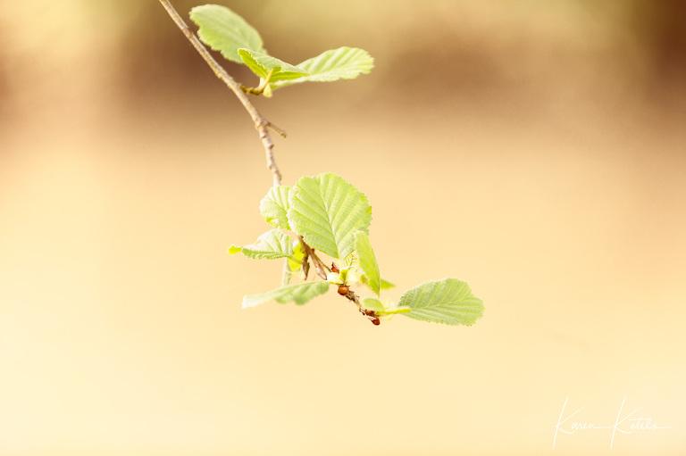 Fine Art portrait of a beech leaf by Karen Ketels