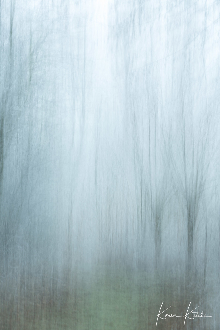 Fine art beeld van 2 kale wilgen in de winter - fine art willows in winter