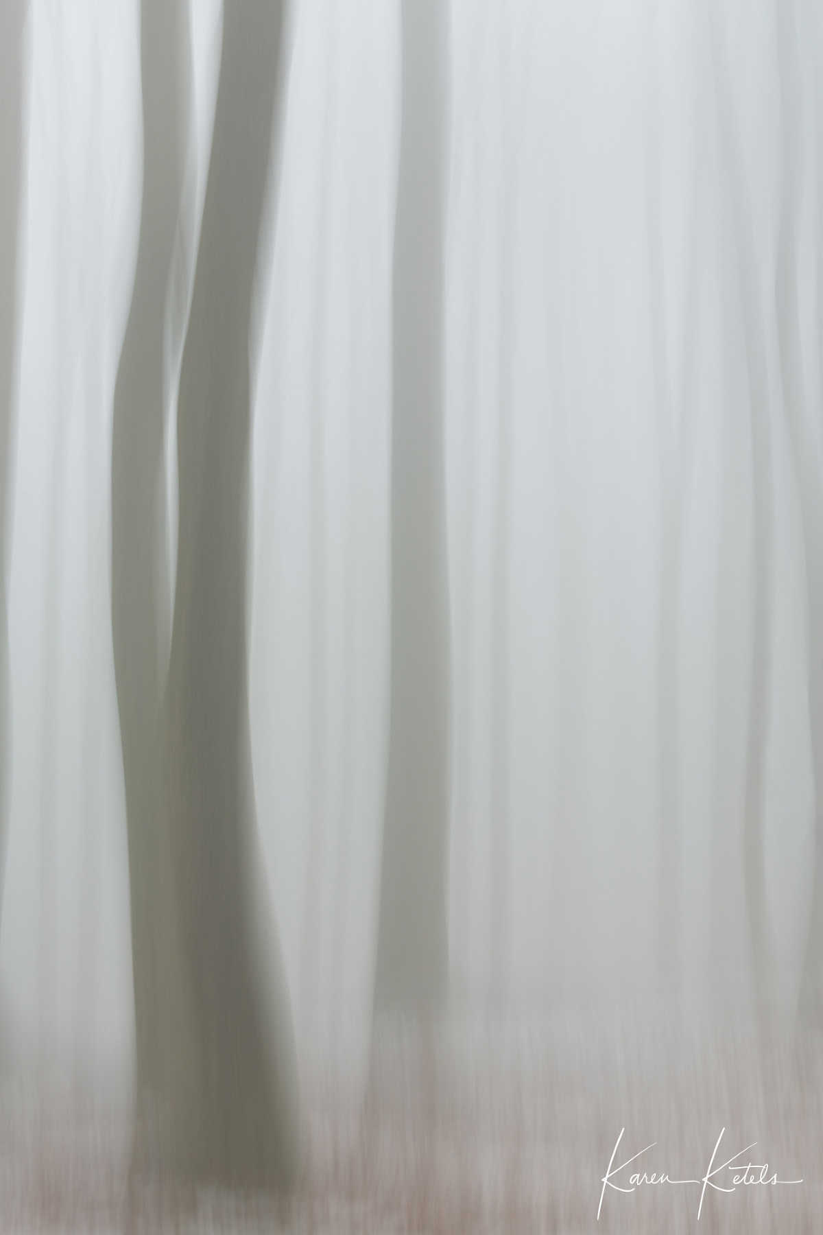 Fine art image of beech trees in the mist by Karen Ketels
