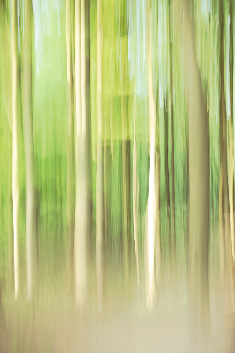 Moving Moments beach forest by Karen Ketels