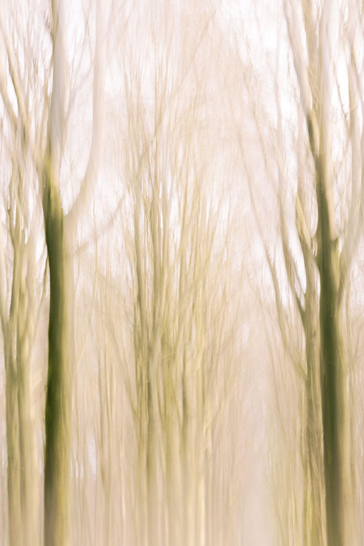 Fine art image of a forest by Karen Ketels